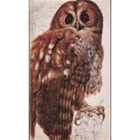 Het Beste Vogelboek ( Readers Digest)