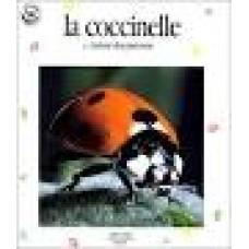 Wapiti boek: Lieveheersbeestjes rood, geel en zwart door Cecile Duval