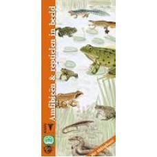 KNNV: Amfibieen en reptielen in beeld (met uitklapkaart)