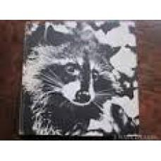 Stoeckicht, Louisa: Het verhaal van ... Rikki de wasbeer