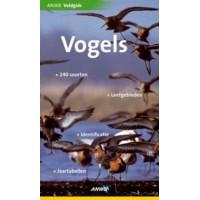 Holden, Peter: ANWB veldgids Vogels (240 soorten/leefgebieden/identificatie/jaartabellen)