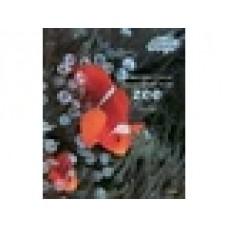 Beesten bladerboek: Zo worden kleine dieren groot in de zee door Anne Royer