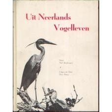 Binsbergen, Nol: Uit Neerlands Vogelleven
